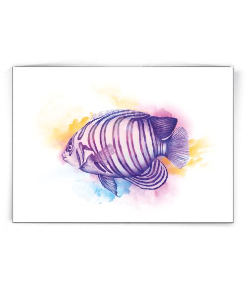 Angel Fish klein